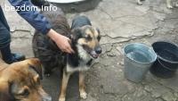 Женско куче на около 1г търси дом