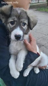 Женско кученце на 3м - намери човеците си - благодаря ви!!!