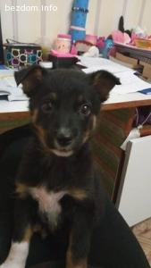 Женско кученце на 6 седмици търси дом